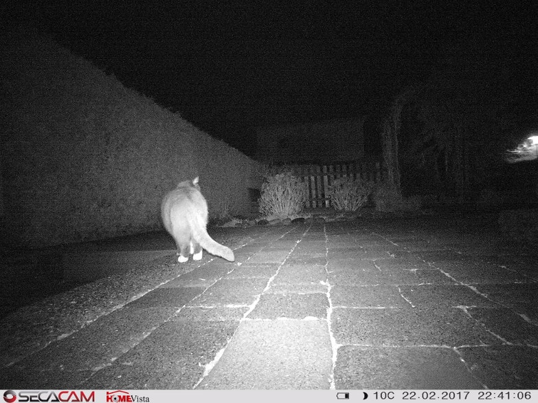 Katze auf dem Abflug. Wie zu erkennen ist, können auch Nachtaufnahmen scharf sein.