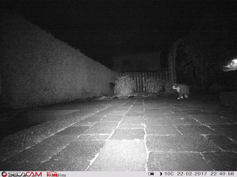Die Katze ist von weitem zu erkennen und identifizierbar.